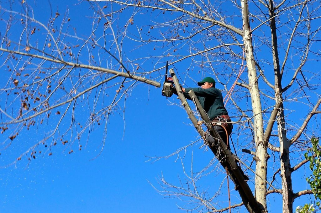 Contact Us-Lakeland FL Tree Trimming and Stump Grinding Services-We Offer Tree Trimming Services, Tree Removal, Tree Pruning, Tree Cutting, Residential and Commercial Tree Trimming Services, Storm Damage, Emergency Tree Removal, Land Clearing, Tree Companies, Tree Care Service, Stump Grinding, and we're the Best Tree Trimming Company Near You Guaranteed!