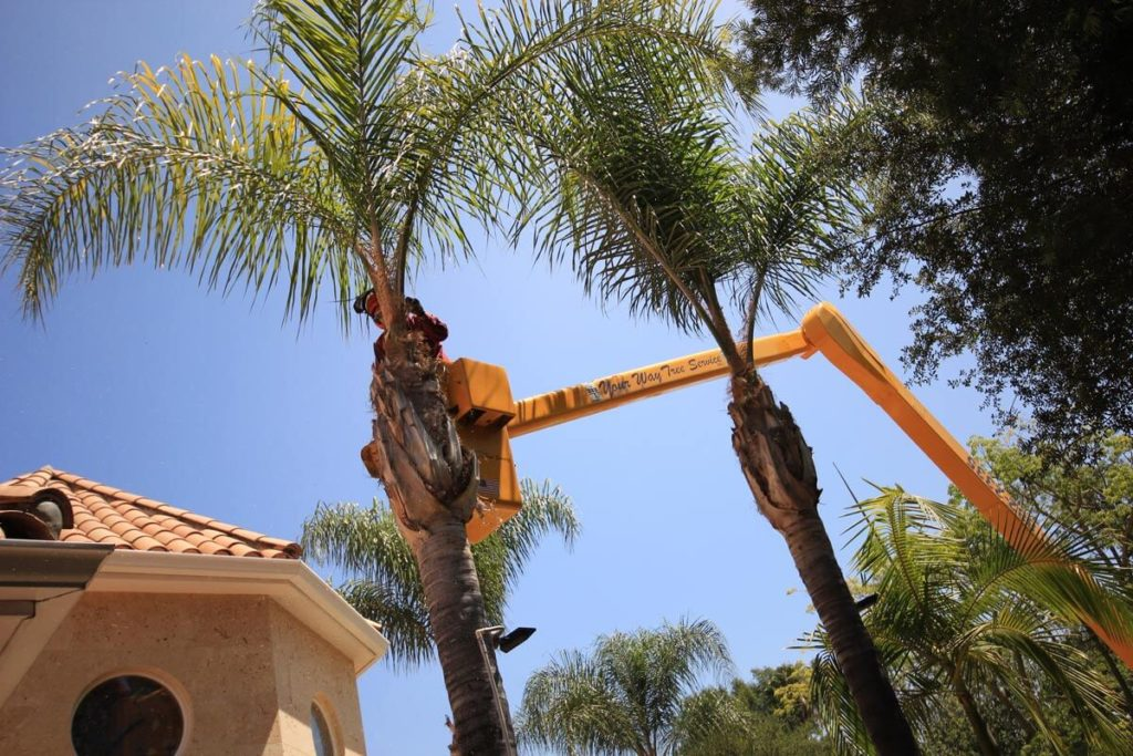 Palm Tree Trimming-Lakeland FL Tree Trimming and Stump Grinding Services-We Offer Tree Trimming Services, Tree Removal, Tree Pruning, Tree Cutting, Residential and Commercial Tree Trimming Services, Storm Damage, Emergency Tree Removal, Land Clearing, Tree Companies, Tree Care Service, Stump Grinding, and we're the Best Tree Trimming Company Near You Guaranteed!