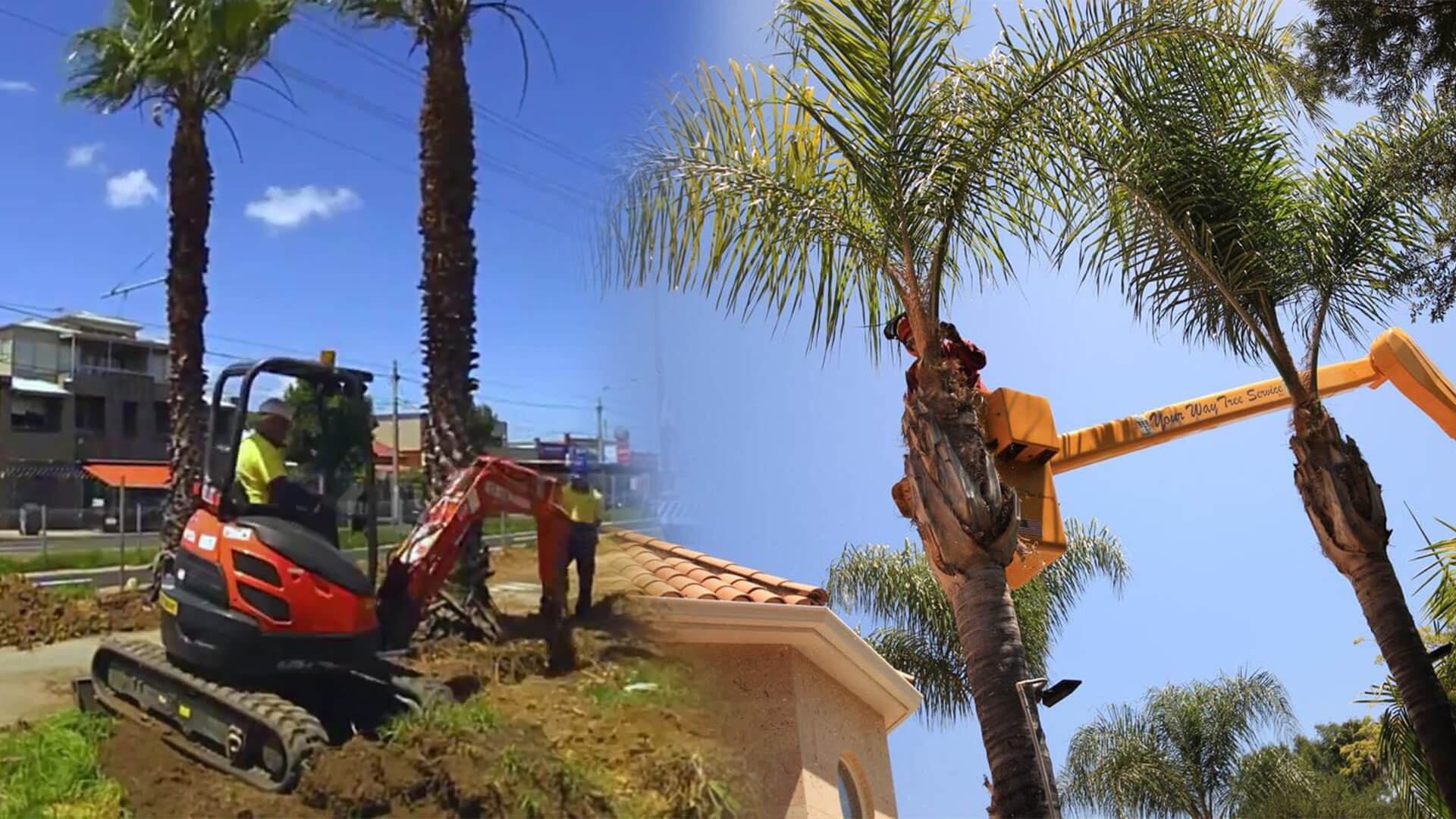Palm tree trimming & palm tree removal-Lakeland FL Tree Trimming and Stump Grinding Services-We Offer Tree Trimming Services, Tree Removal, Tree Pruning, Tree Cutting, Residential and Commercial Tree Trimming Services, Storm Damage, Emergency Tree Removal, Land Clearing, Tree Companies, Tree Care Service, Stump Grinding, and we're the Best Tree Trimming Company Near You Guaranteed!