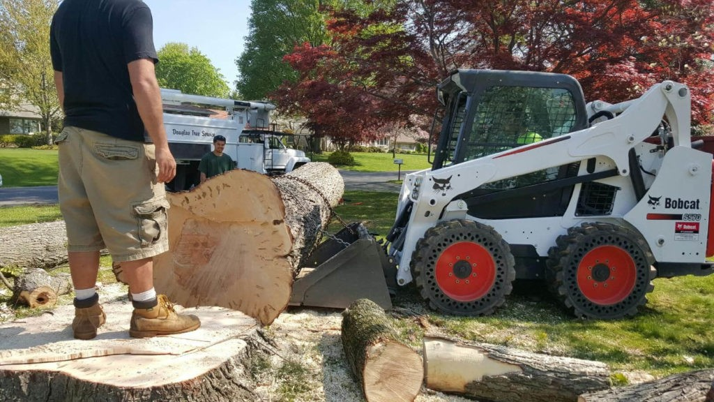 Services-Lakeland FL Tree Trimming and Stump Grinding Services-We Offer Tree Trimming Services, Tree Removal, Tree Pruning, Tree Cutting, Residential and Commercial Tree Trimming Services, Storm Damage, Emergency Tree Removal, Land Clearing, Tree Companies, Tree Care Service, Stump Grinding, and we're the Best Tree Trimming Company Near You Guaranteed!