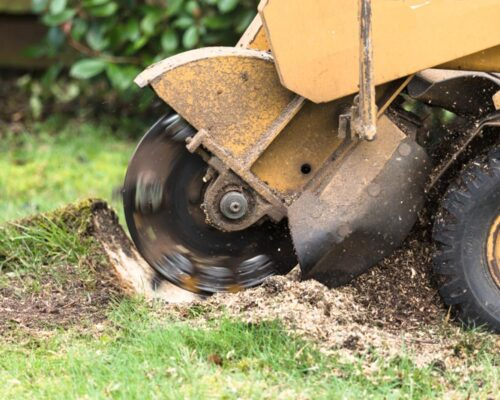 Stump Grinding-Lakeland FL Tree Trimming and Stump Grinding Services-We Offer Tree Trimming Services, Tree Removal, Tree Pruning, Tree Cutting, Residential and Commercial Tree Trimming Services, Storm Damage, Emergency Tree Removal, Land Clearing, Tree Companies, Tree Care Service, Stump Grinding, and we're the Best Tree Trimming Company Near You Guaranteed!