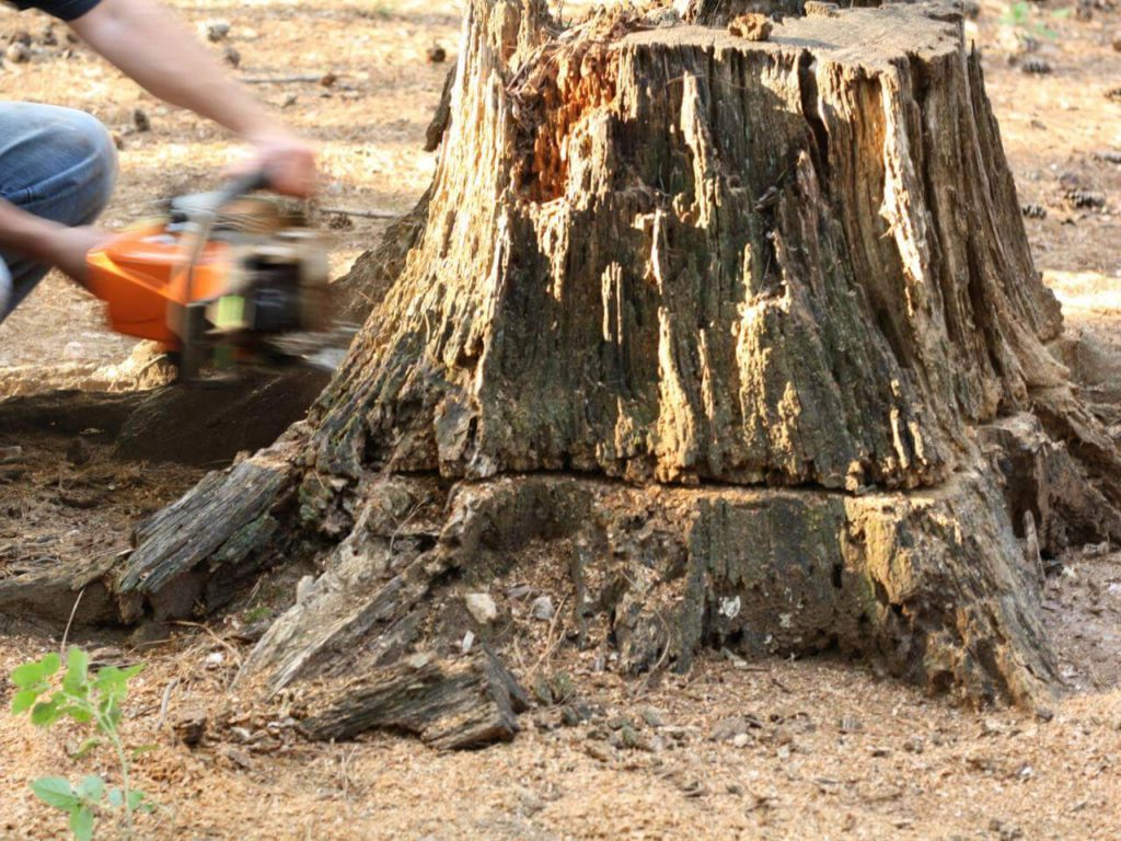 Stump Removal-Lakeland FL Tree Trimming and Stump Grinding Services-We Offer Tree Trimming Services, Tree Removal, Tree Pruning, Tree Cutting, Residential and Commercial Tree Trimming Services, Storm Damage, Emergency Tree Removal, Land Clearing, Tree Companies, Tree Care Service, Stump Grinding, and we're the Best Tree Trimming Company Near You Guaranteed!