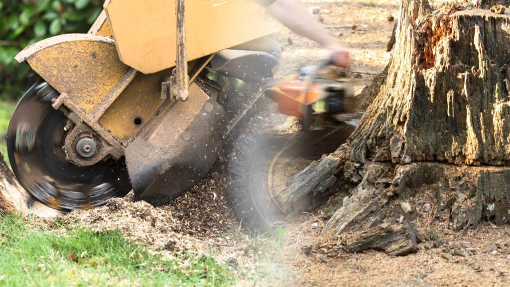 Stump grinding & removal-Lakeland FL Tree Trimming and Stump Grinding Services-We Offer Tree Trimming Services, Tree Removal, Tree Pruning, Tree Cutting, Residential and Commercial Tree Trimming Services, Storm Damage, Emergency Tree Removal, Land Clearing, Tree Companies, Tree Care Service, Stump Grinding, and we're the Best Tree Trimming Company Near You Guaranteed!