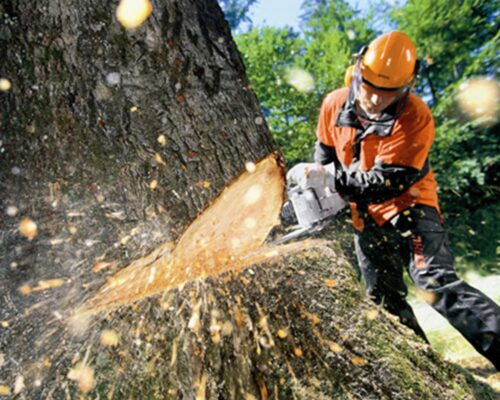 Tree Cutting-Lakeland FL Tree Trimming and Stump Grinding Services-We Offer Tree Trimming Services, Tree Removal, Tree Pruning, Tree Cutting, Residential and Commercial Tree Trimming Services, Storm Damage, Emergency Tree Removal, Land Clearing, Tree Companies, Tree Care Service, Stump Grinding, and we're the Best Tree Trimming Company Near You Guaranteed!