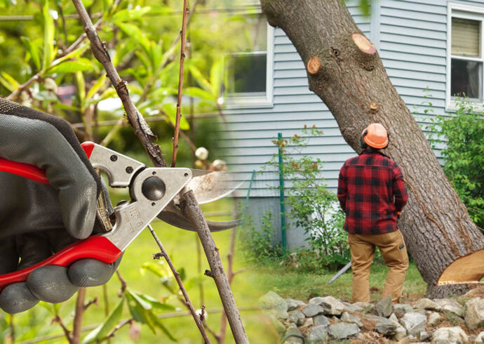 Tree pruning & tree removal-Lakeland FL Tree Trimming and Stump Grinding Services-We Offer Tree Trimming Services, Tree Removal, Tree Pruning, Tree Cutting, Residential and Commercial Tree Trimming Services, Storm Damage, Emergency Tree Removal, Land Clearing, Tree Companies, Tree Care Service, Stump Grinding, and we're the Best Tree Trimming Company Near You Guaranteed!